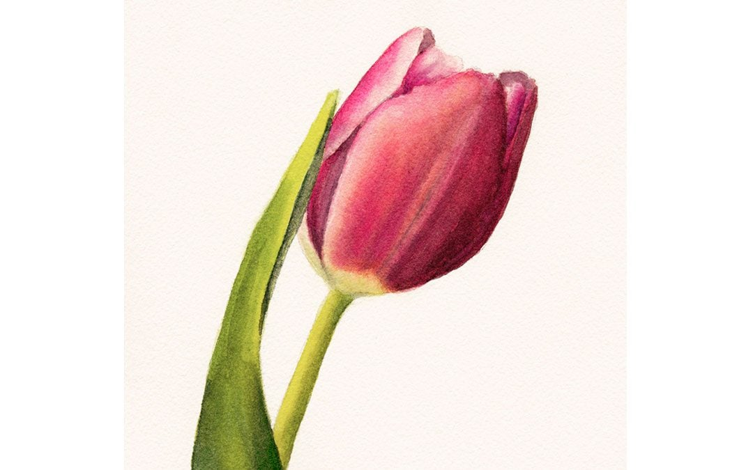 How to Paint a Tulip with Watercolor